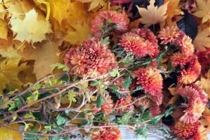 unbekannte-farbenprächtige-Blume