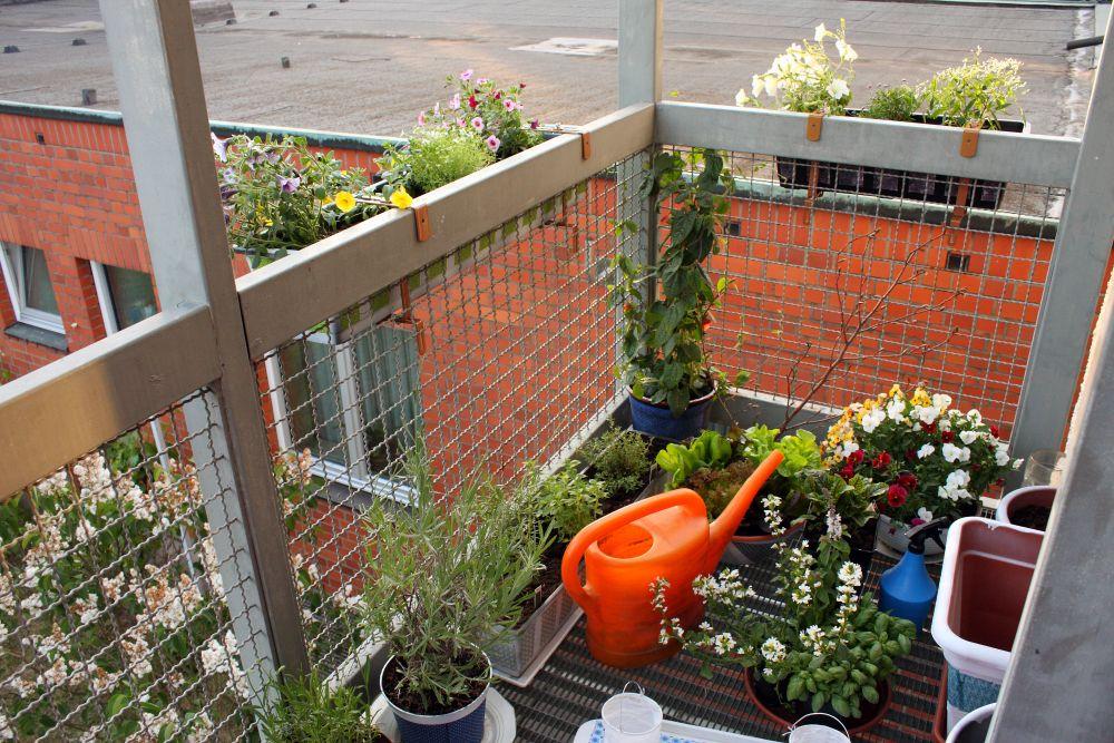 Kräuter Balkon Herbst_08:31:53 ~ Egenis.com : Inspirierend Garten ... Duftpflanzen Im Garten Blumen Krauter